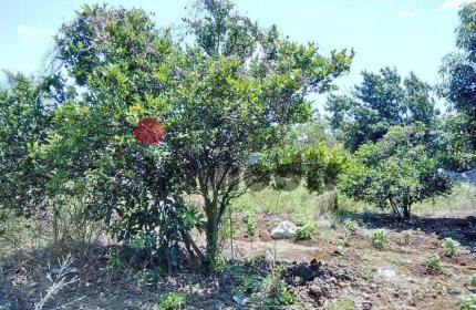 Proche Le Clos du Littoral, terrain plat de 555 toises / 50 perches / 2110 m2, avec des arbres fruitiers, dans l'angle des trois rues et entièrement cloturé